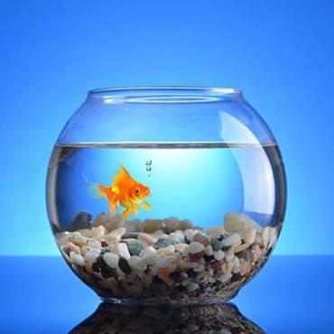 Пособие для начинающего аквариумиста