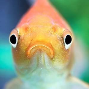 Распространенные ошибки новичков при выборе и установке аквариума