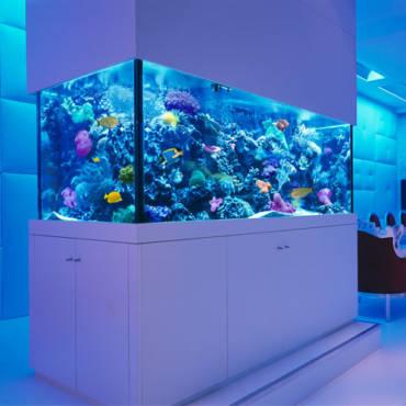 Разновидности современных аквариумов