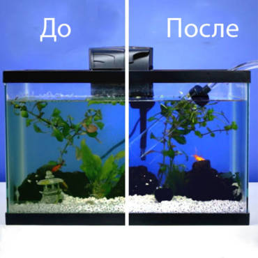 Зачем нужны фильтры для аквариума
