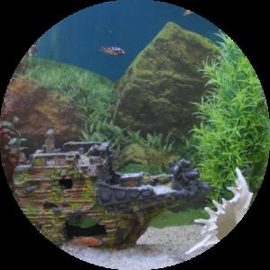 Стиль оформления аквариума альтернативный