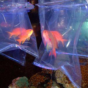 Как сохранить аквариум и его обитателей при перевозке