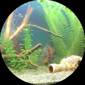 Стиль оформления аквариума классический