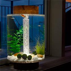 Альтернативный стиль оформления аквариума — выбор ценителей креатива