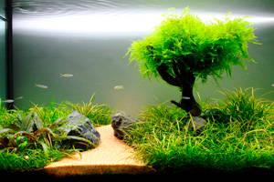 Альтернативное оформление аквариума