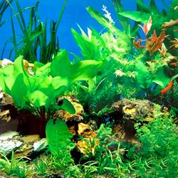 Основа идеального аквариума — живые растения