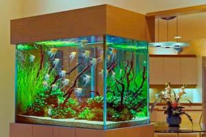 Производство аквариумов для дома и офиса