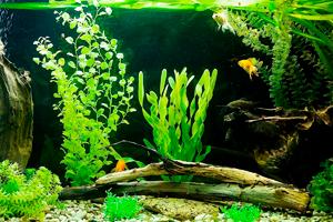 Классический стиль оформления аквариума