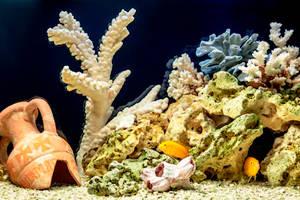 Морской стиль оформления аквариума