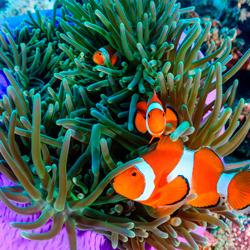 Стиль оформления аквариума «Псевдоморе»