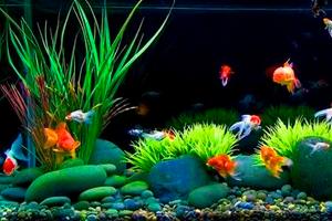 Японский стиль оформления аквариума