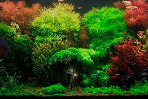 Коллекторский стиль оформления аквариума